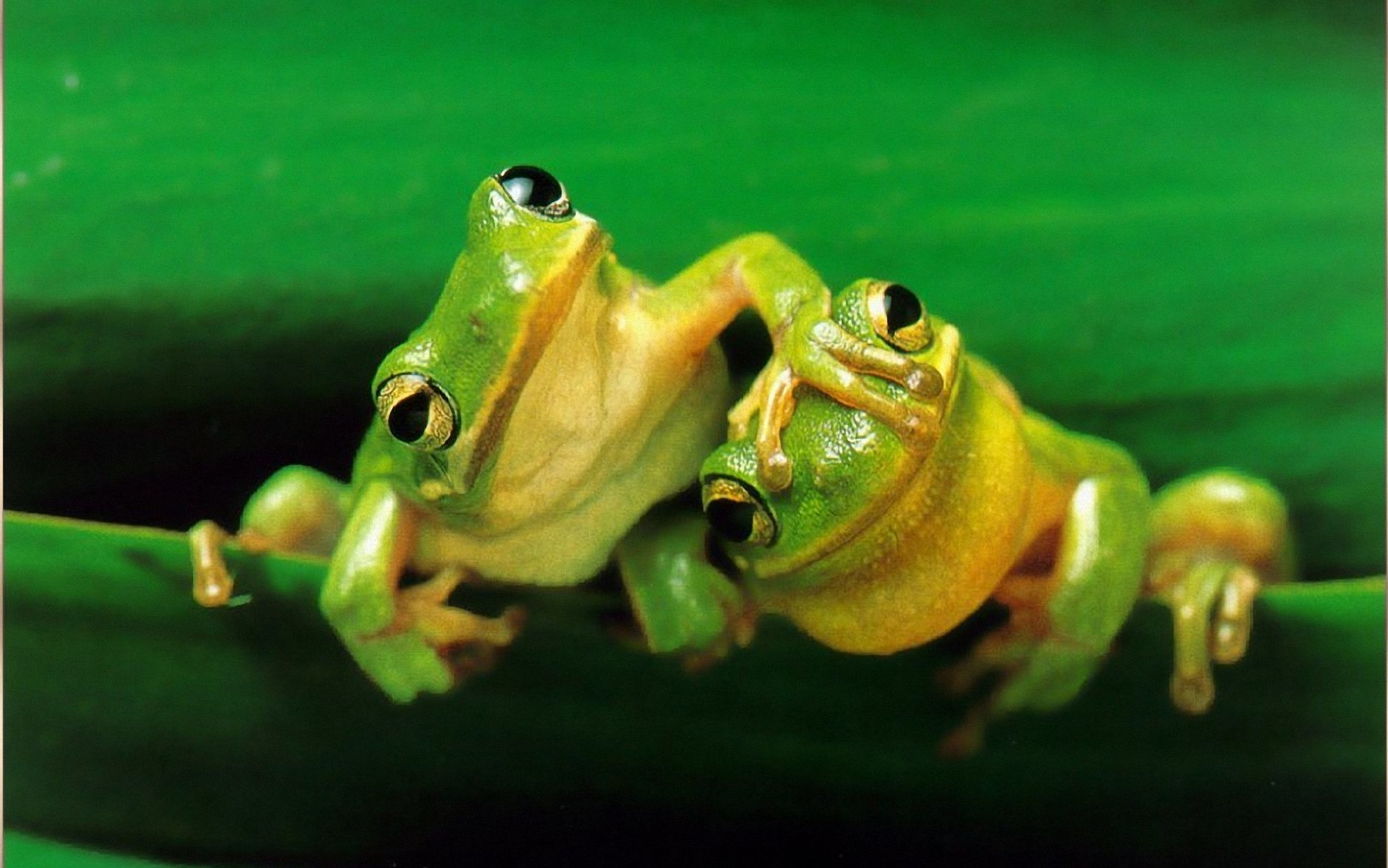 2 frogs showed me